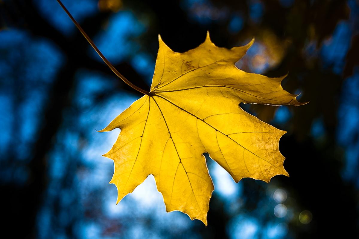 Mellow Yellow by John Altdorfer