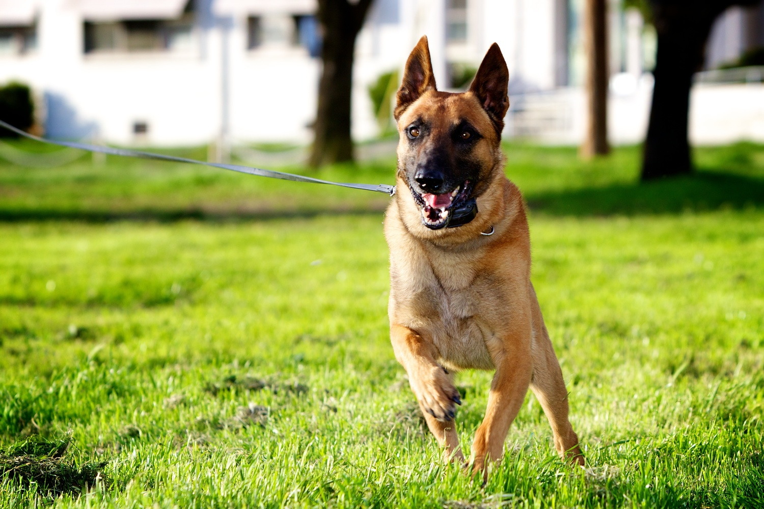 Redding, CA Dog Training Costs - Woof Training