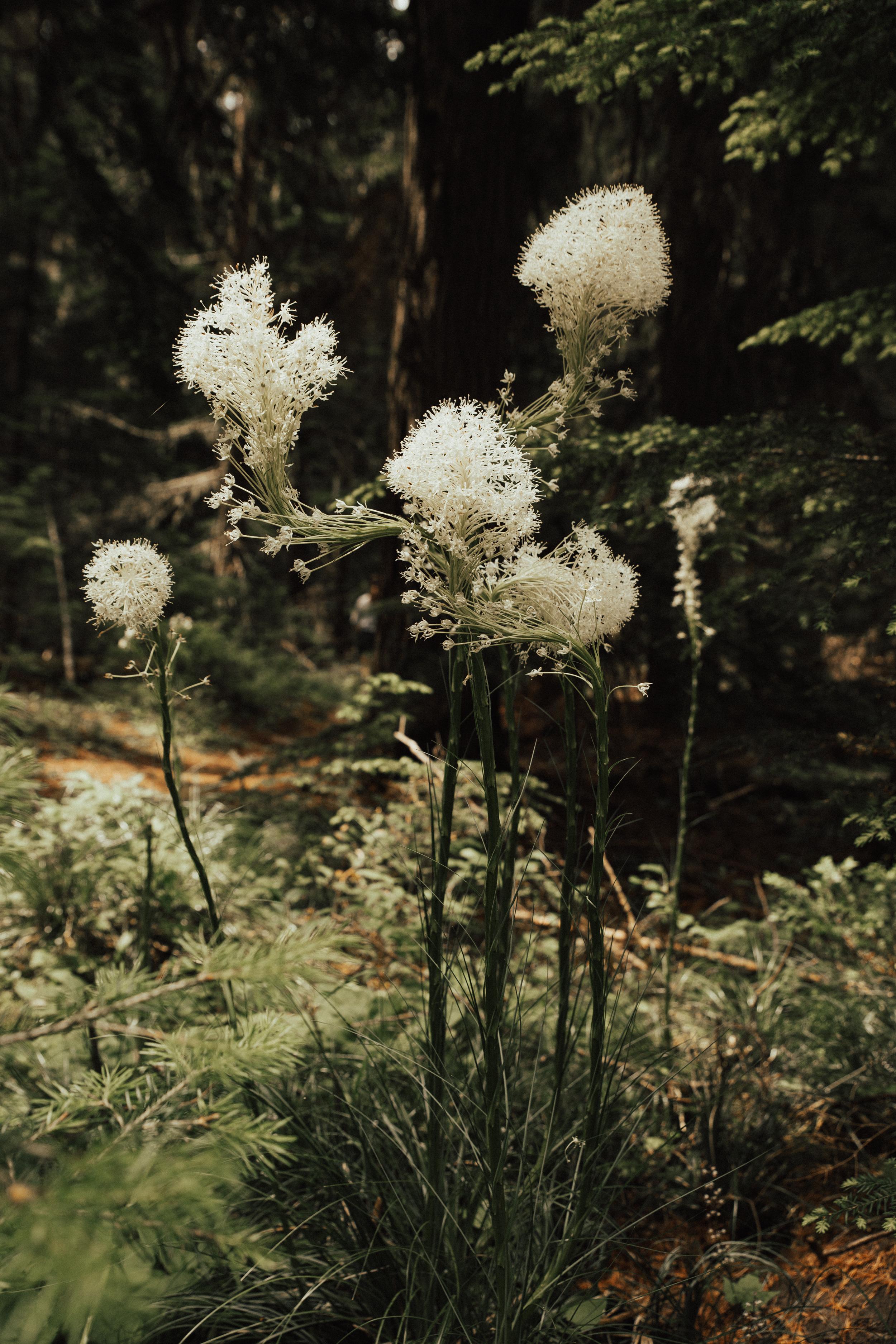 montana-15.jpg