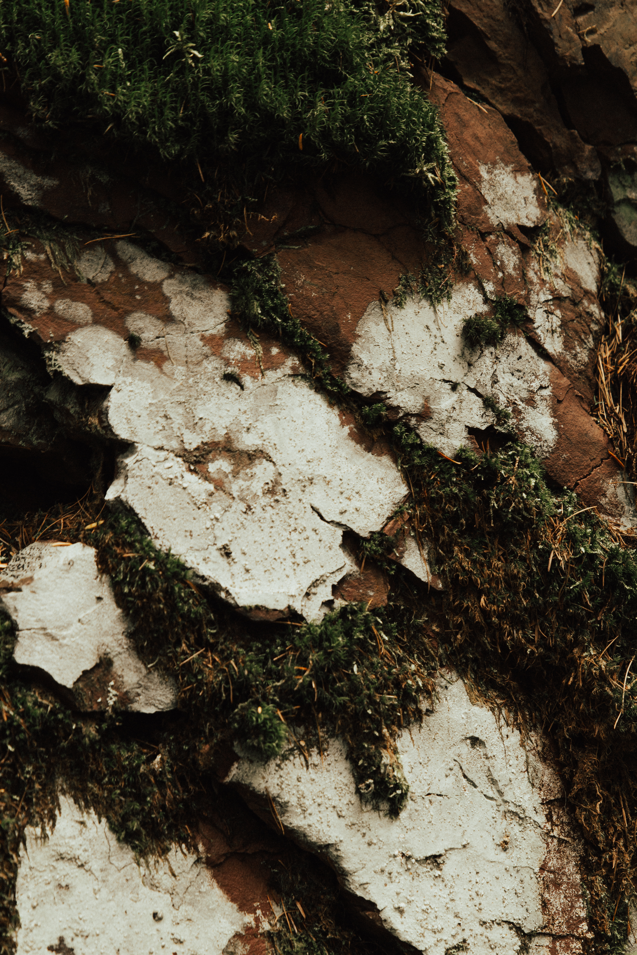 montana-17.jpg