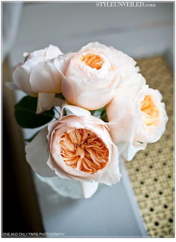 cabbage roses.jpg