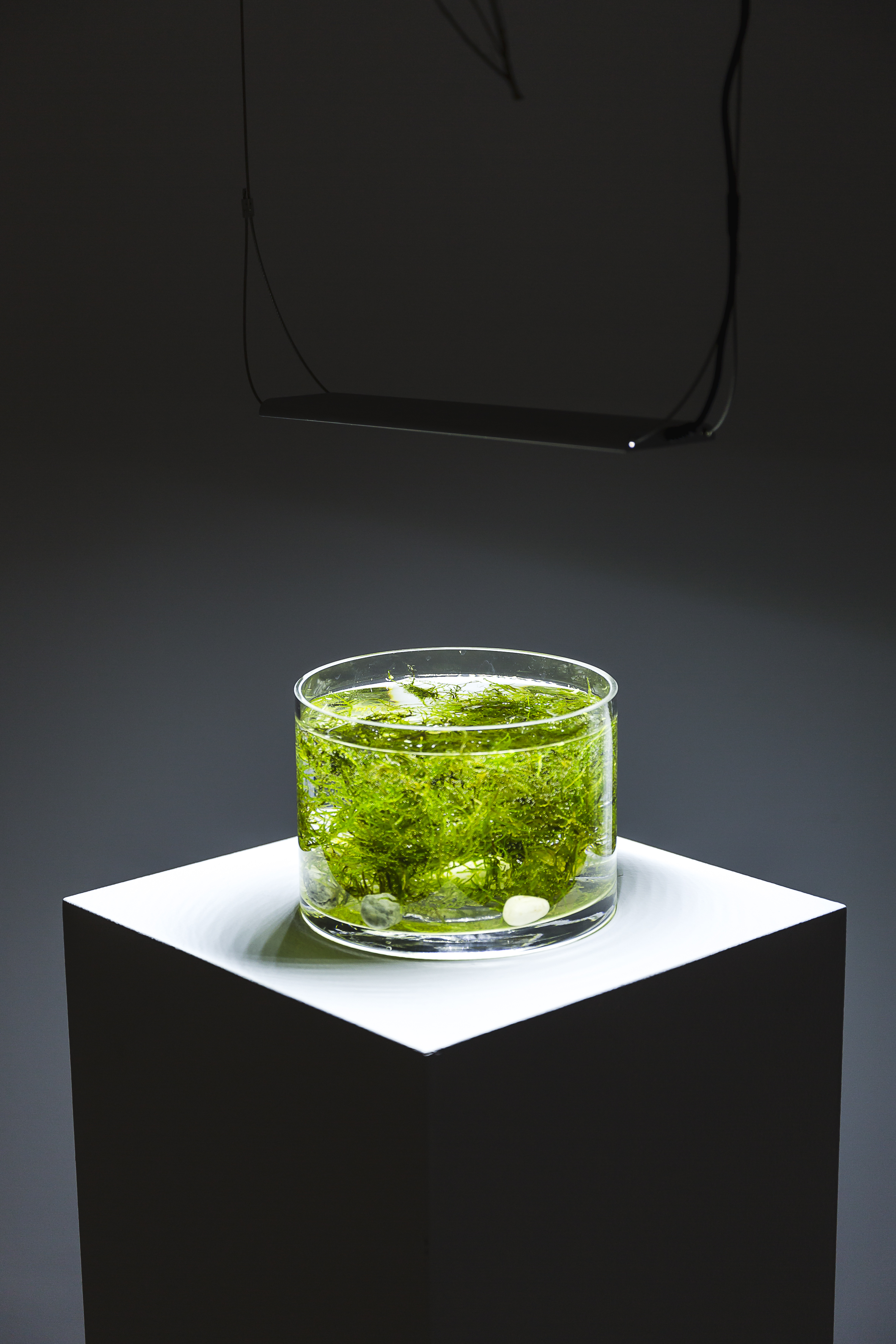 Untitled # 2 , from the series  Holding my breath , 2018, Installation with live video feed, four channel audio, chain, plant matter, water and grow lights, commissioned by Campbelltown Arts Centre. Photography Credit: Document Photography.