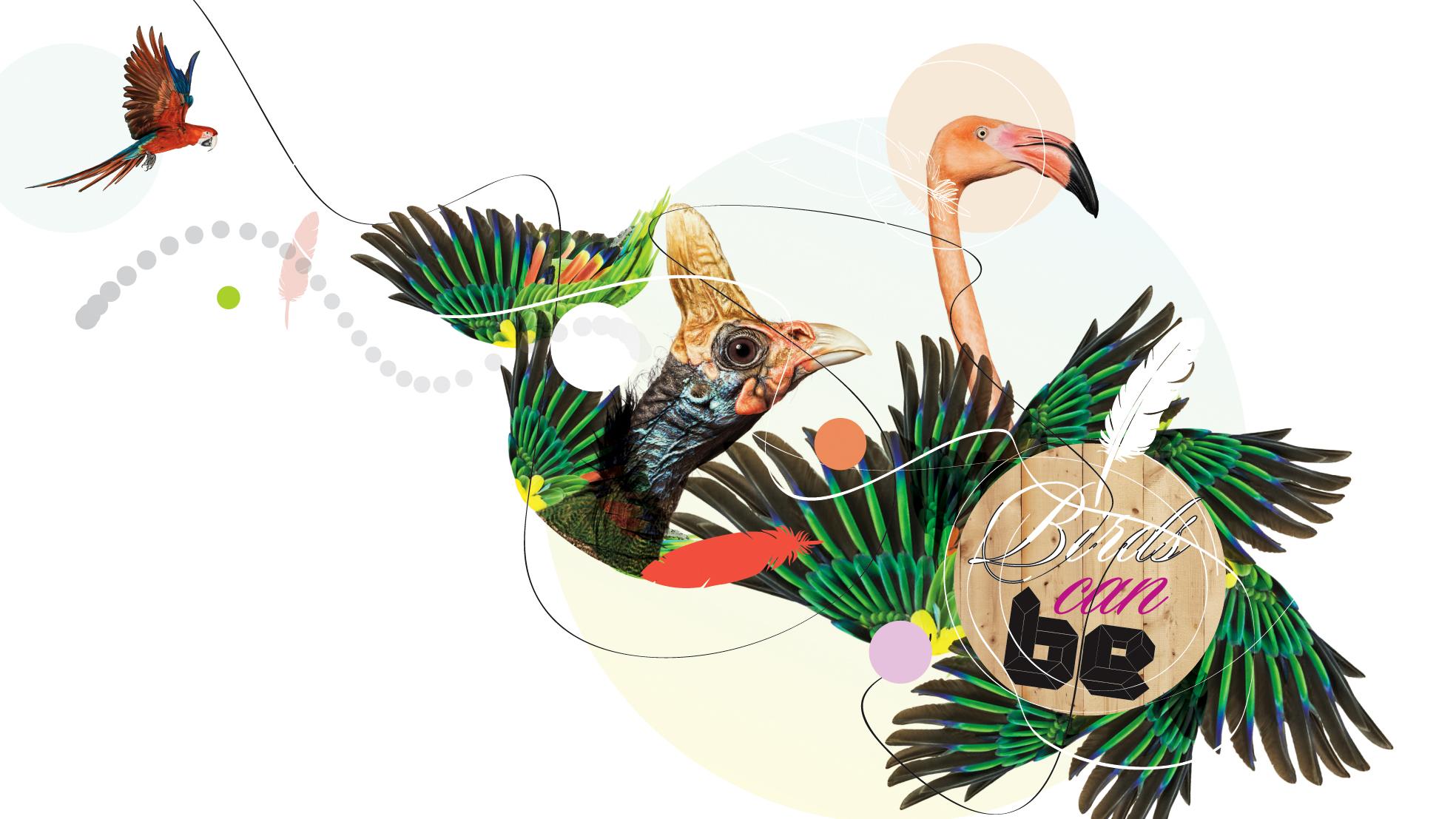 BIRDS_06.jpg