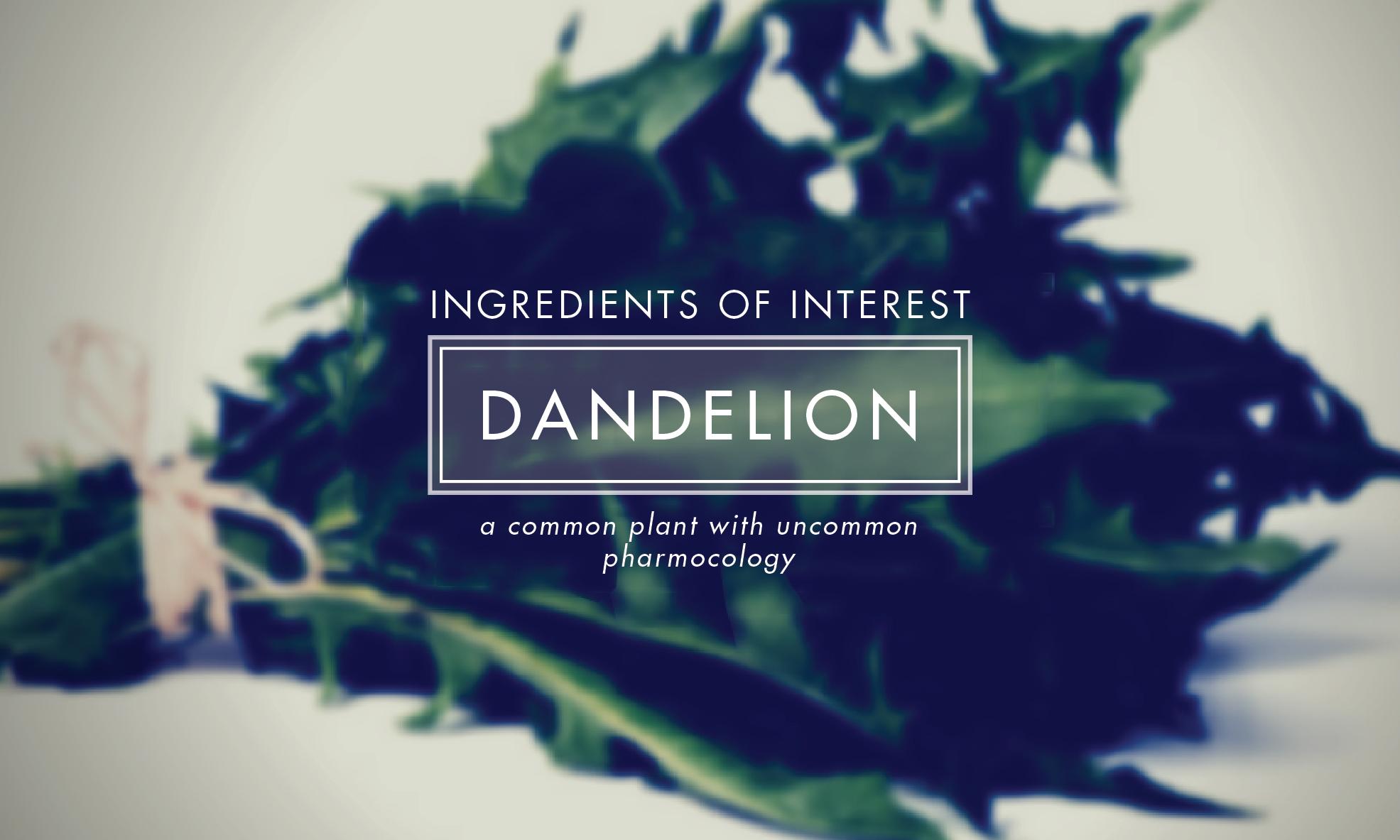 DANDELION medium-09.jpg