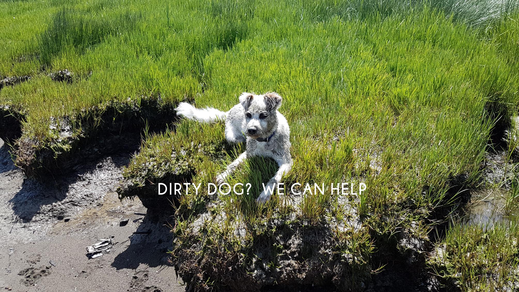 dirtydog.png