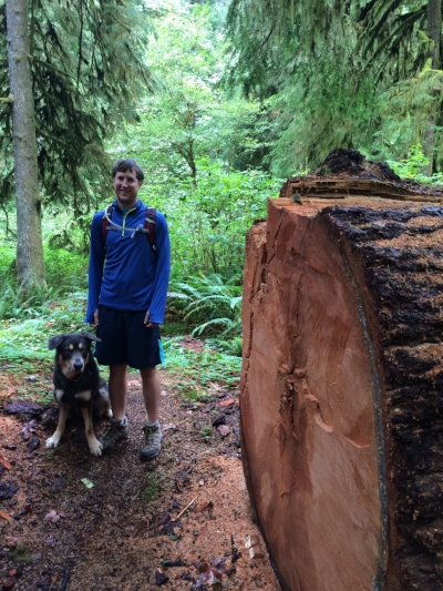 This tree was taken down by mushrooms, spouse and dog for scale