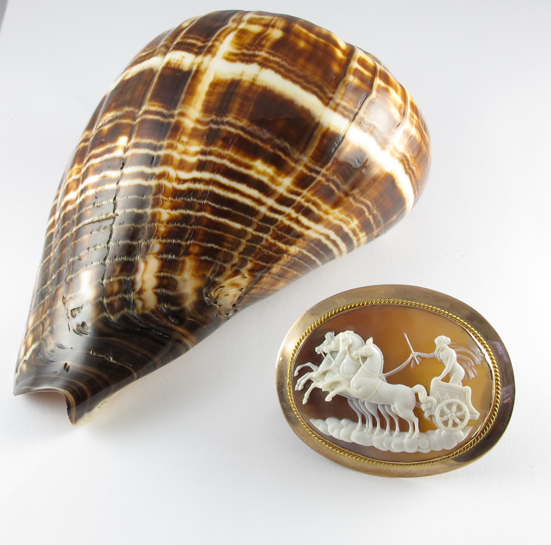 Conch Shell Cameo