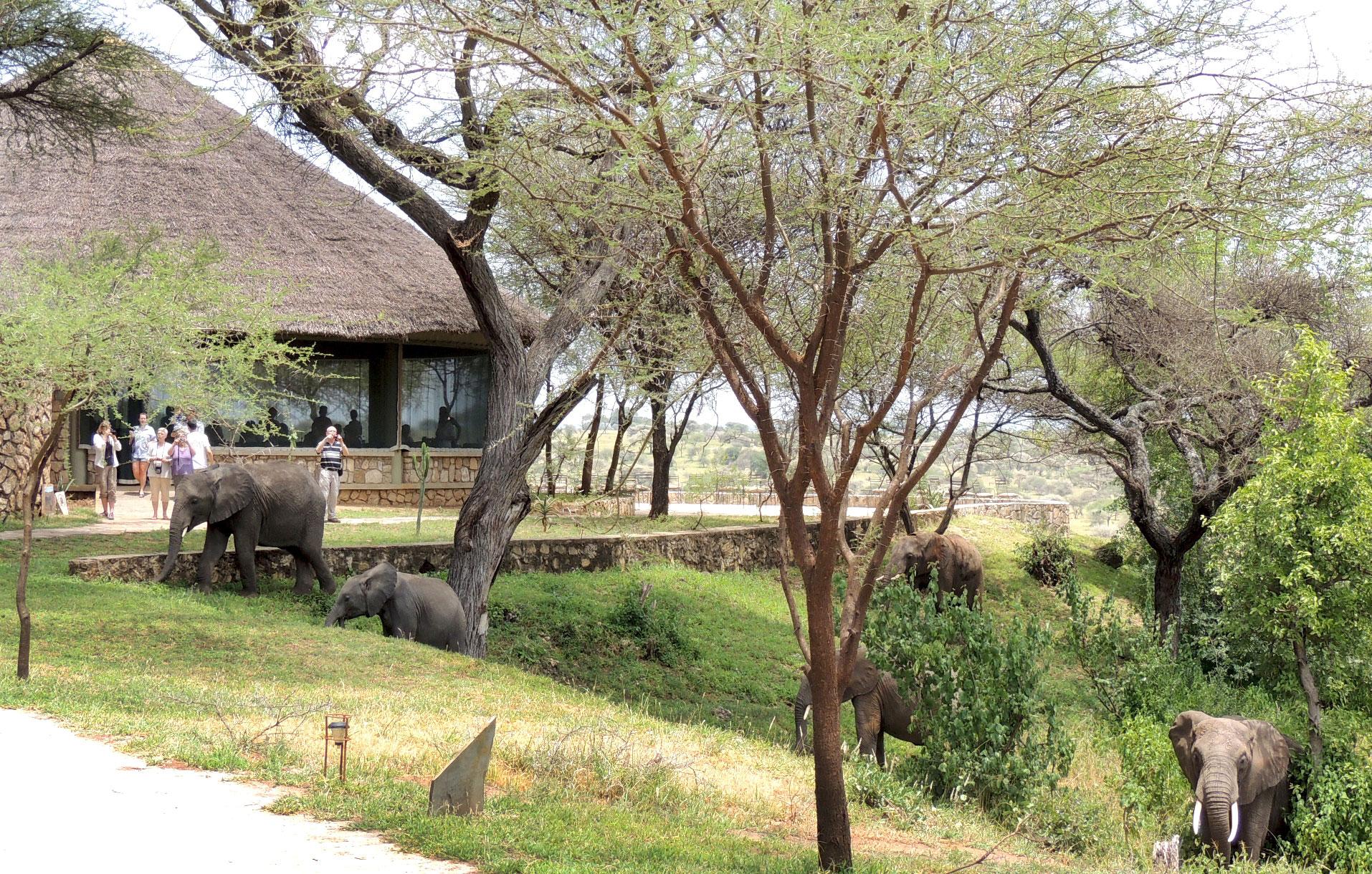 Wildlife-at-TSL-4.jpg