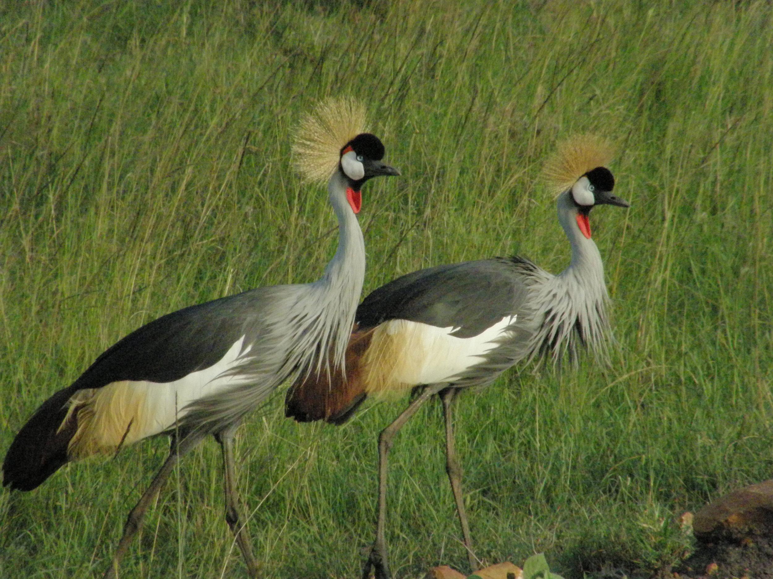 Wildlife-at-TSL-5.jpg