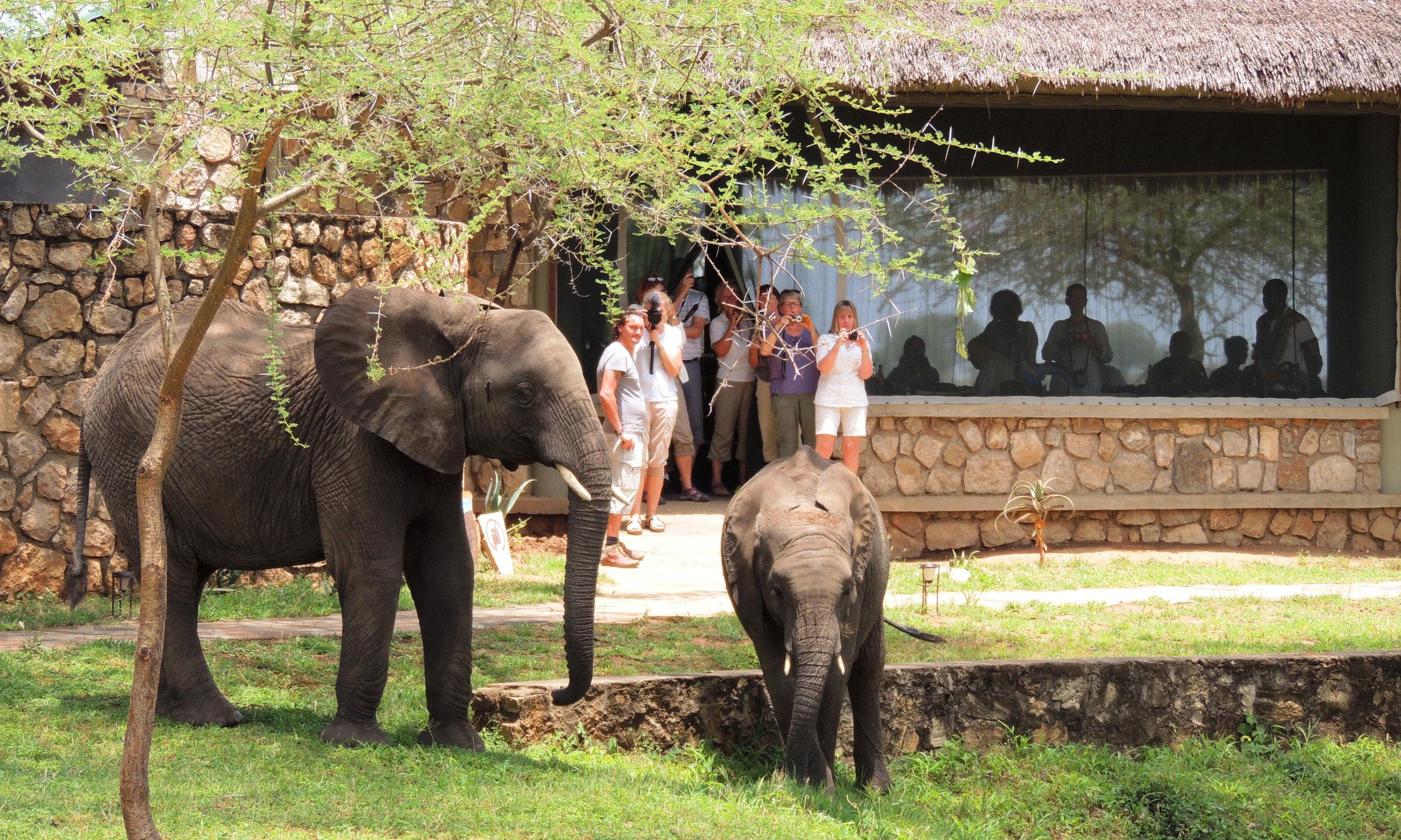Wildlife-at-TSL-3.jpg