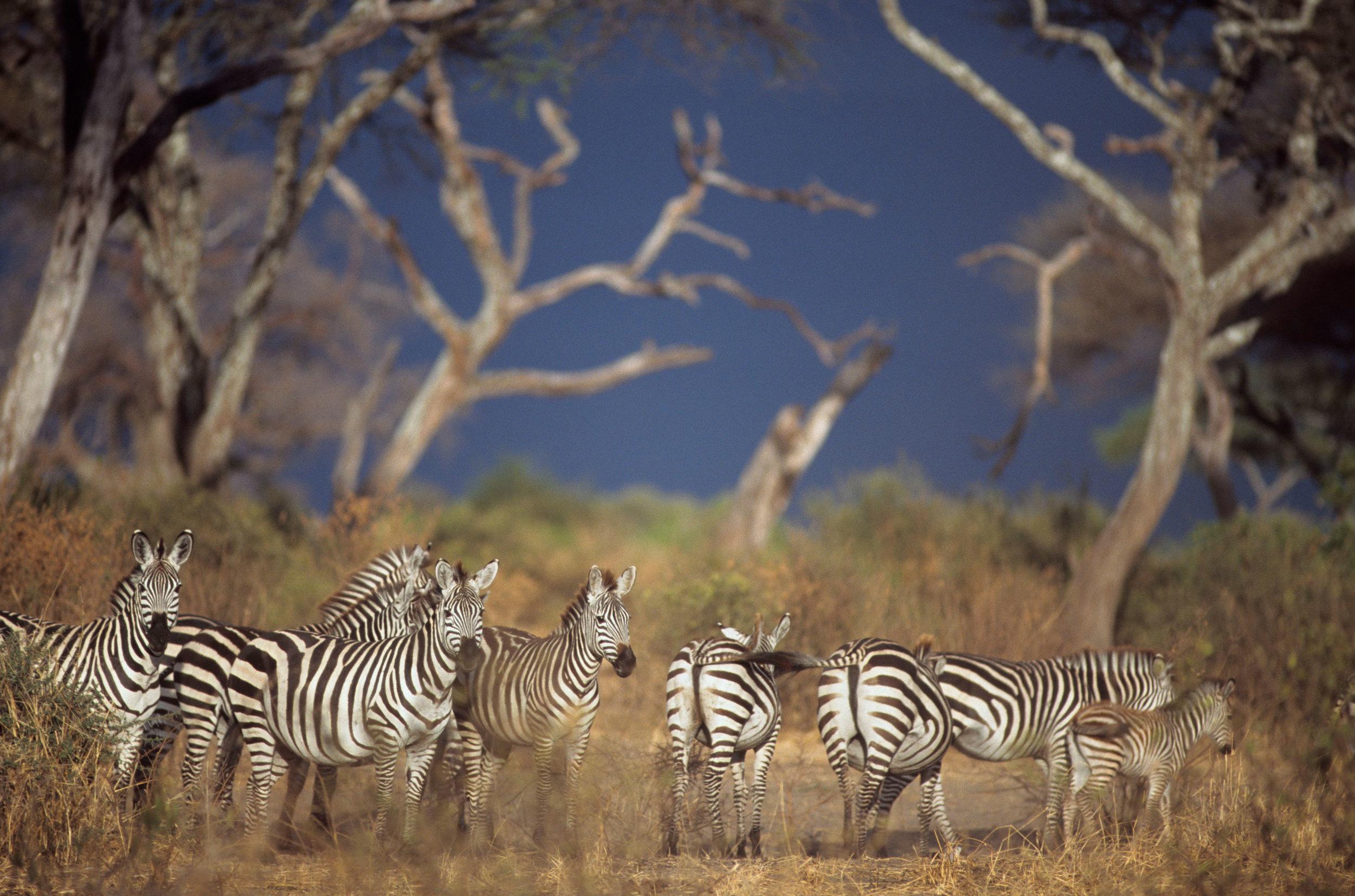 Wildlife-at-TSL-9.jpg