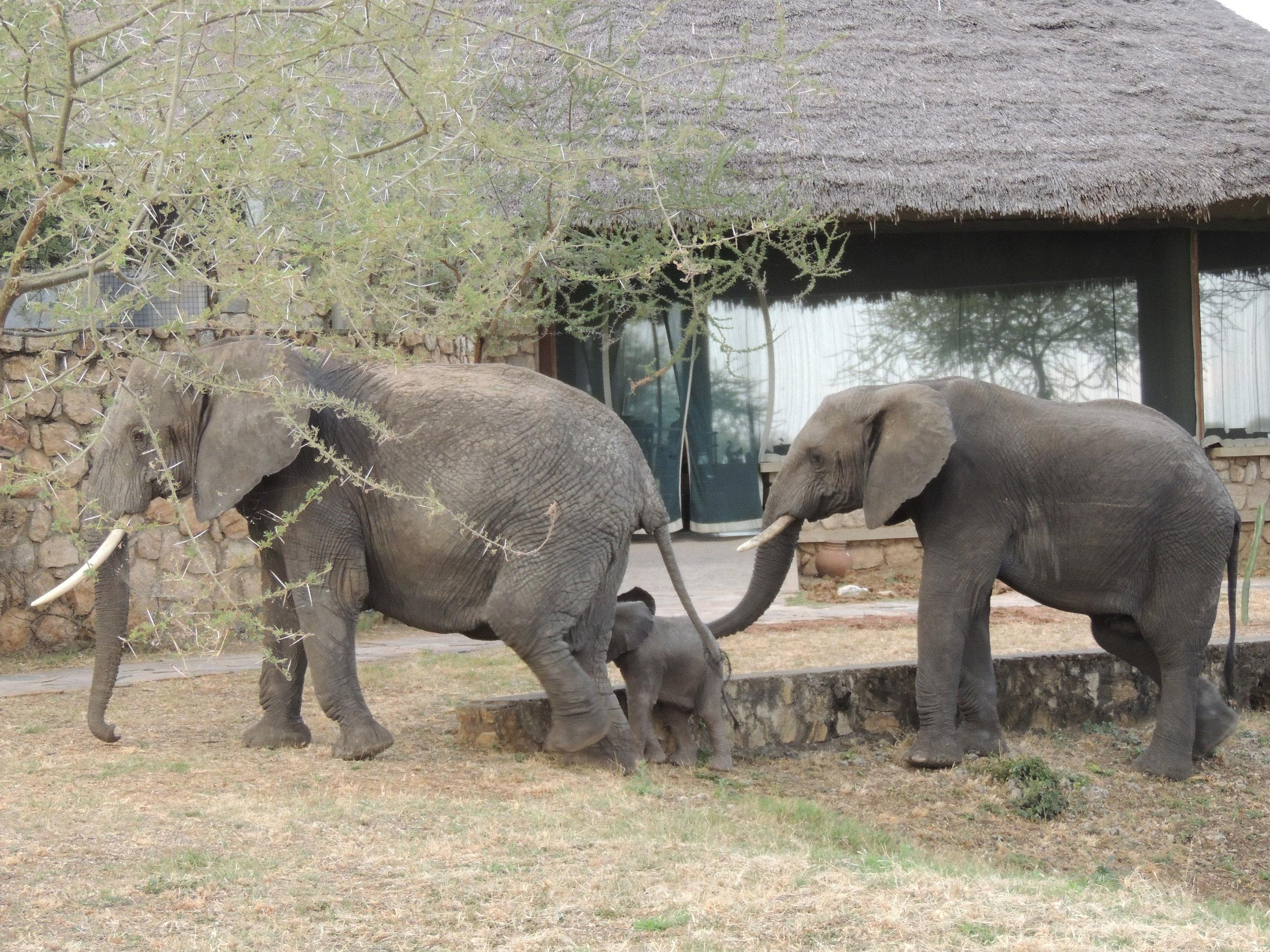 Wildlife-at-TSL-8.jpg