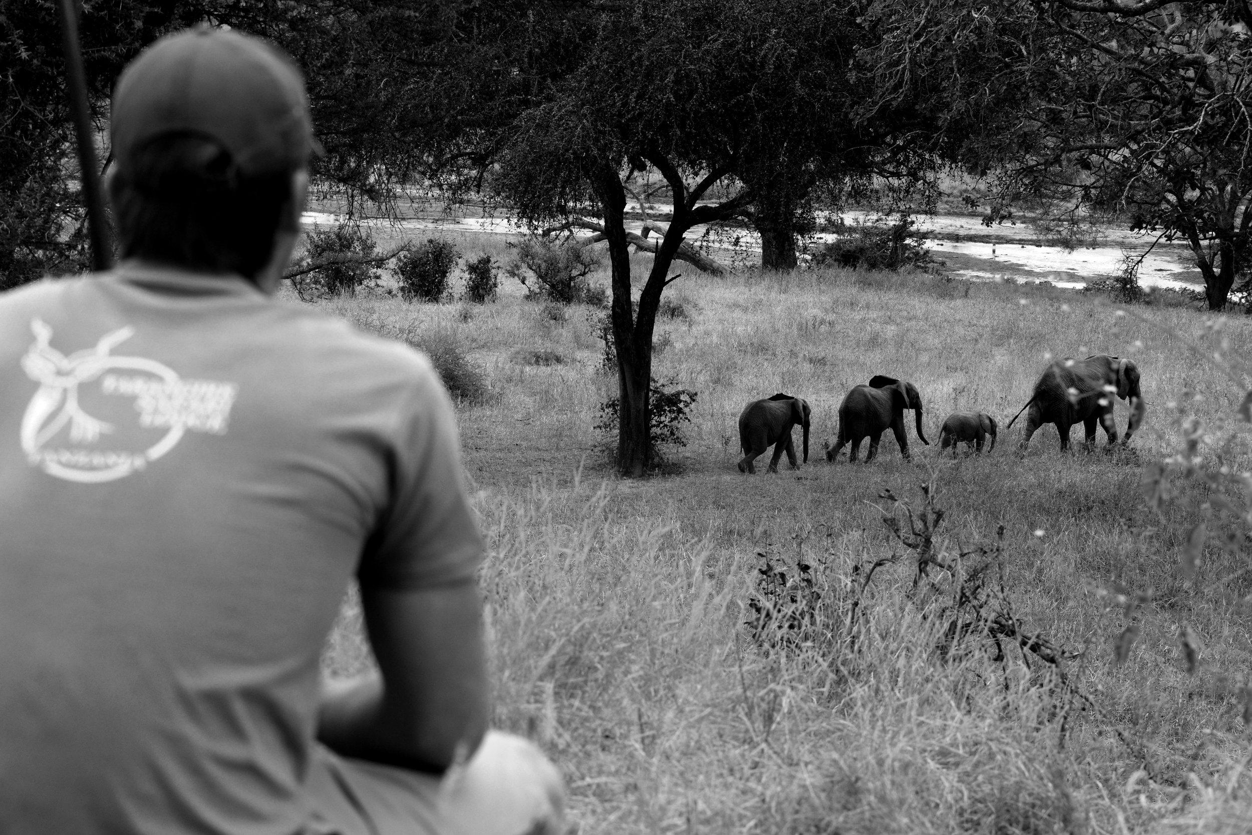 Wildlife-at-TSL.jpg