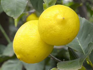 Lemons can be beneficial food for the throat chakra.
