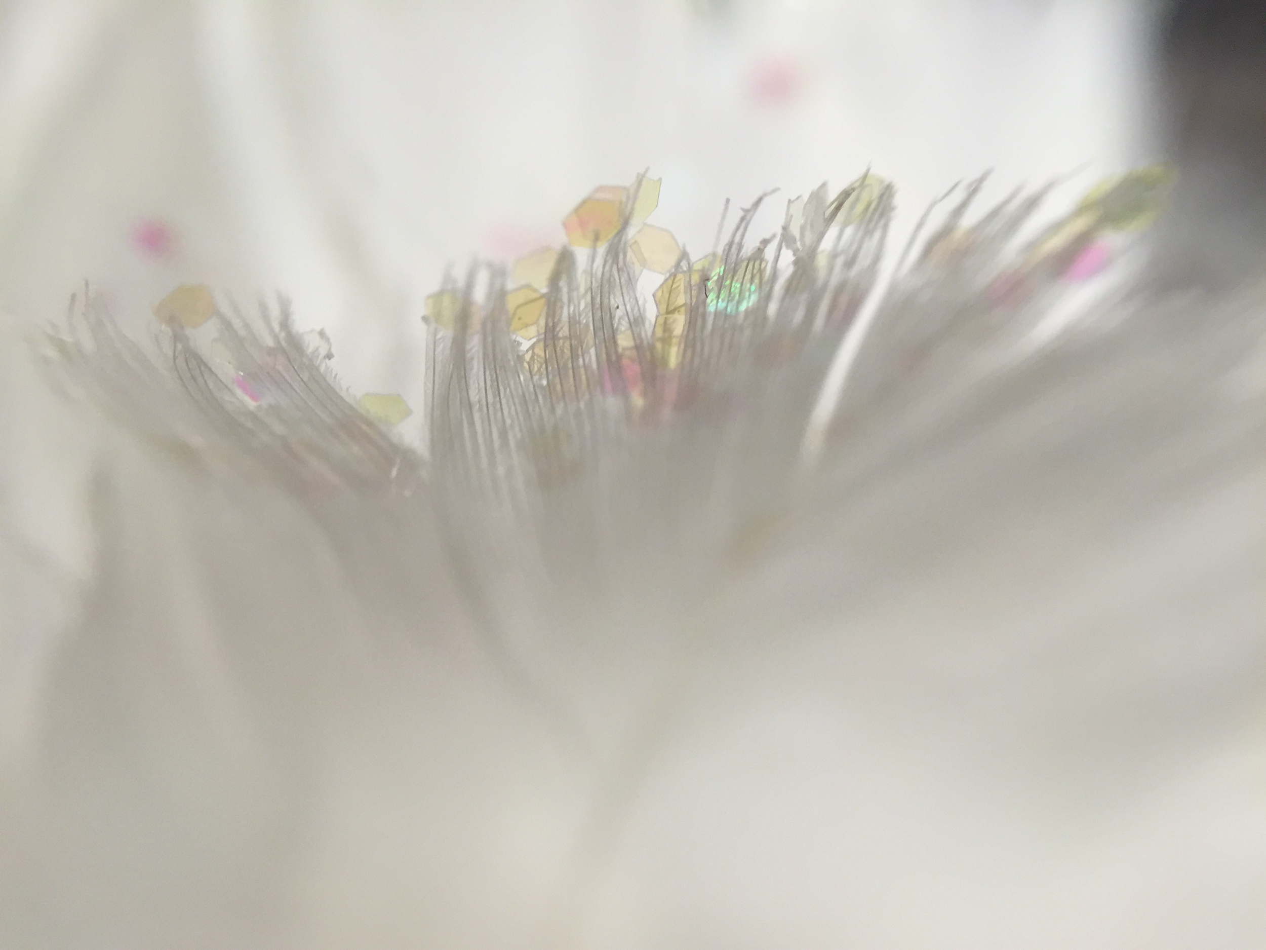pocket lens macro image of a feather