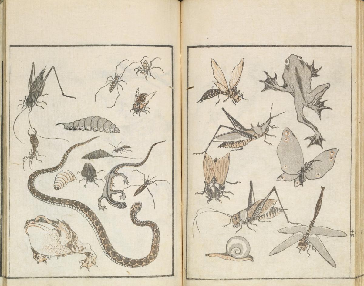 Planche de dessin, Hokusai Manga