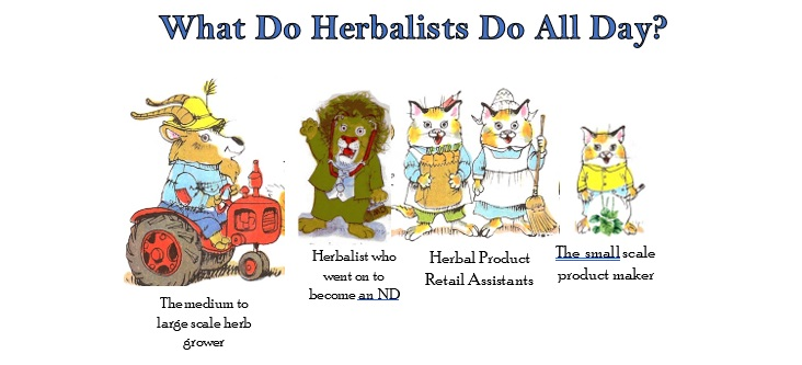What Do Herbalists Do all day.jpg