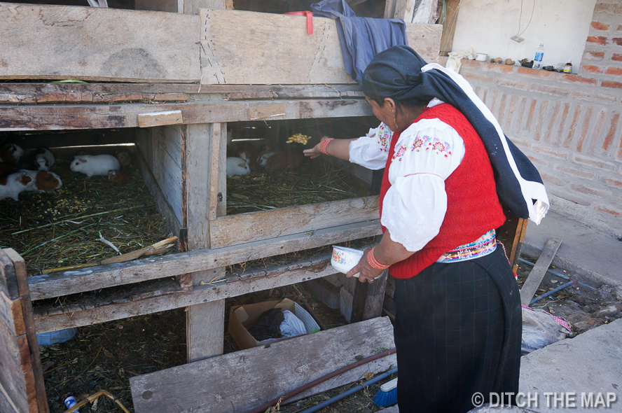 The Mother Feeds the Guinea Pigs at our Homestay in Ecuador