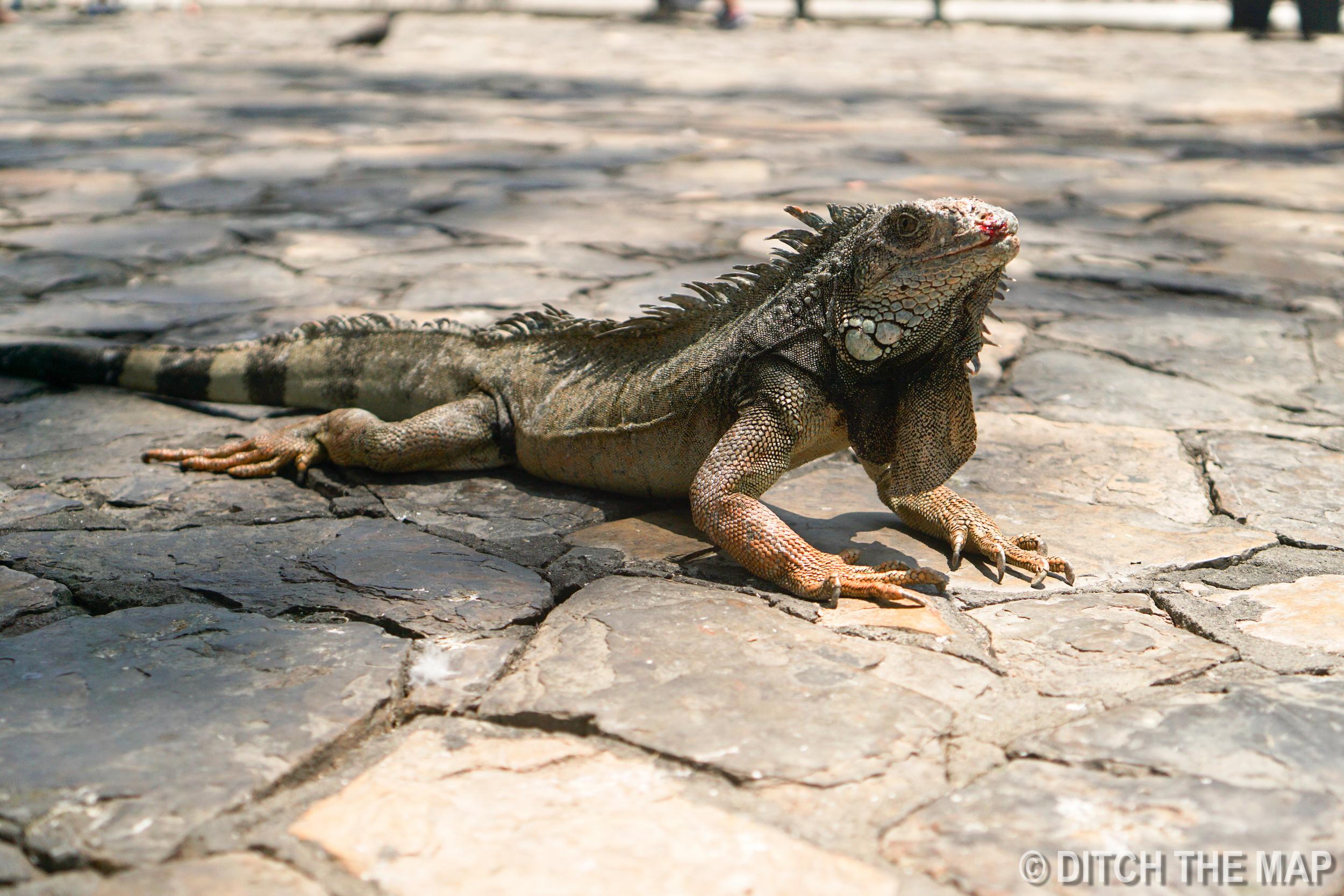 Parque de las Iguanas in Guayaquil, Ecuador