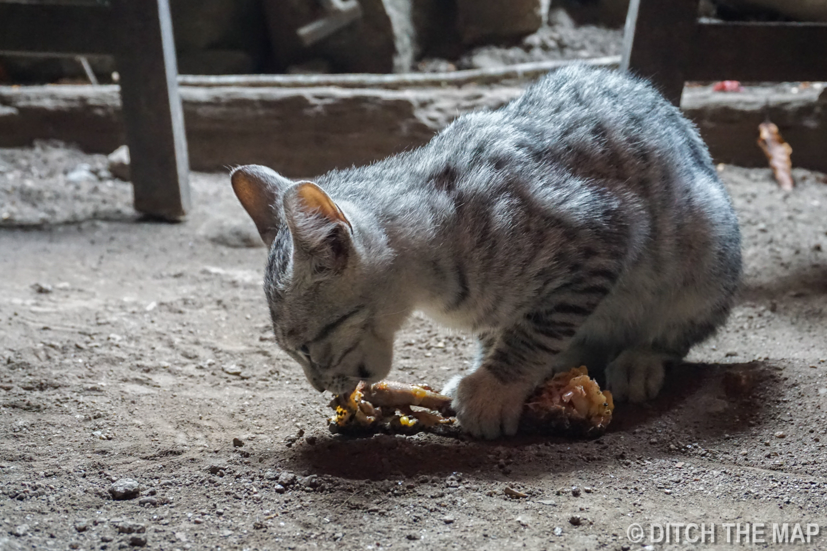 Adorable kitten steals our chicken bone while eating at hydroelectrica