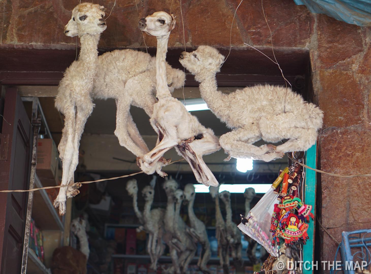 LLAMA FETUSES in LA PAZ, BOLIVIA