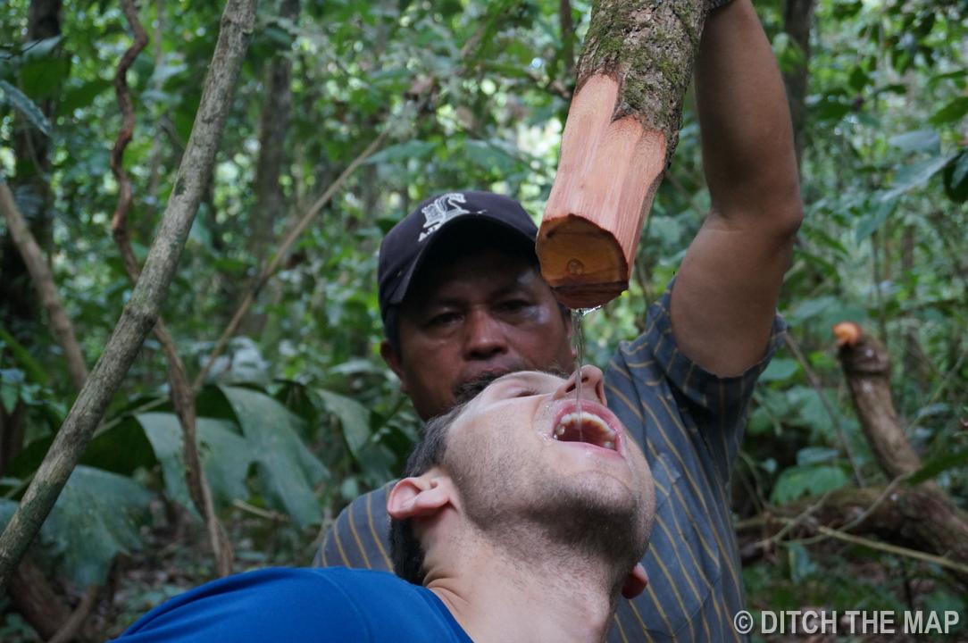 Amazonian Jungle (Rurrenabaque), Bolivia