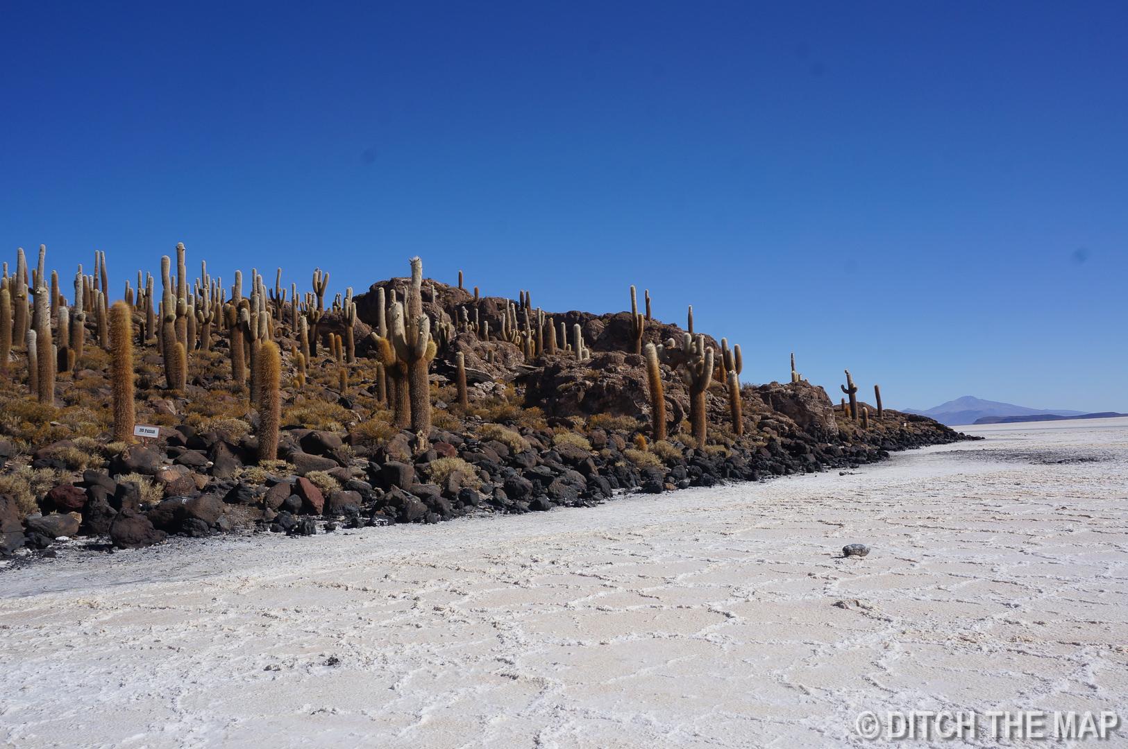 Isla de los Pescados in Salar de Uyuni, Bolivia