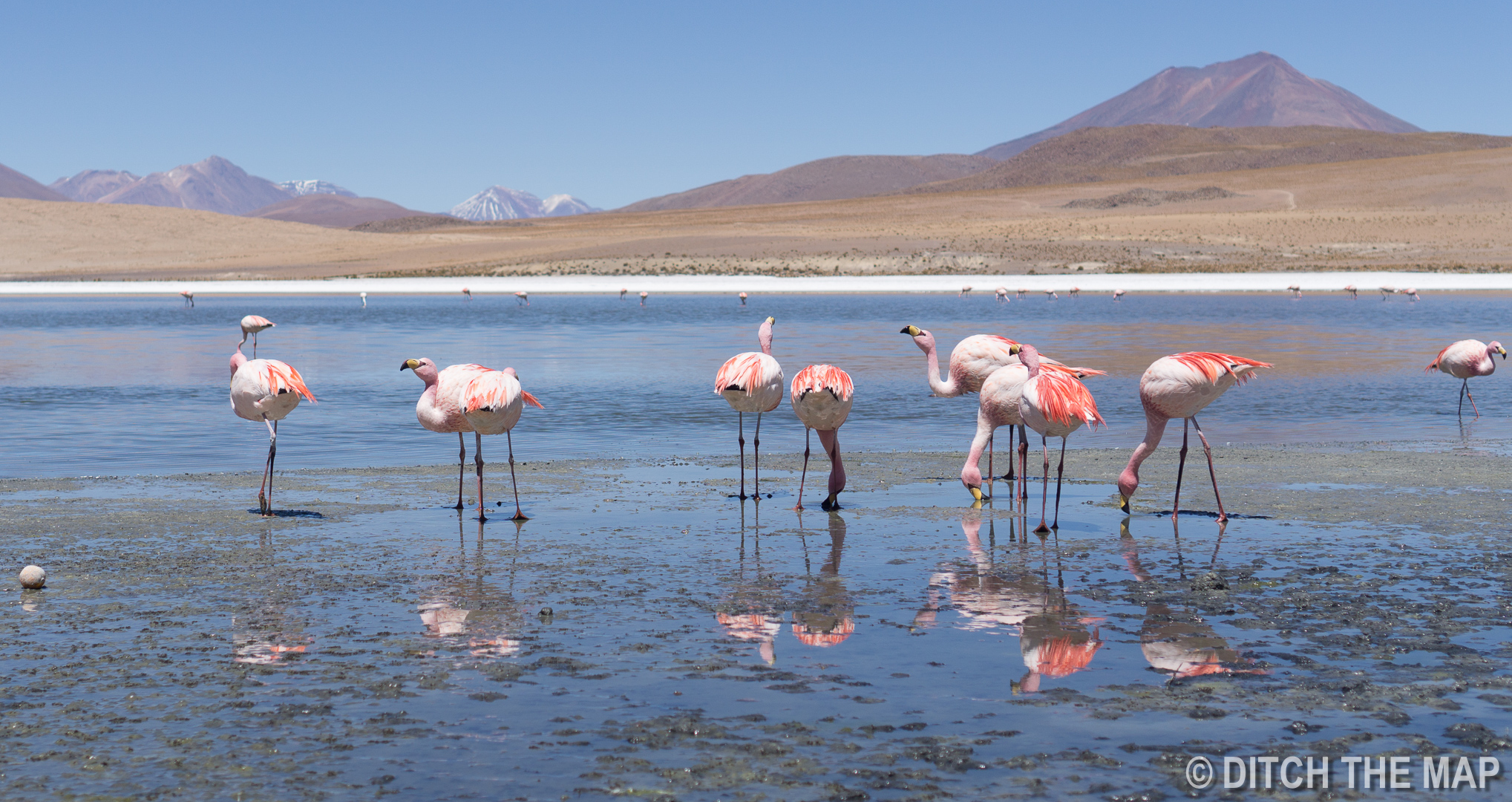 One of the many lagoons we visited with flamingos in Salar de Uyuni, Bolivia