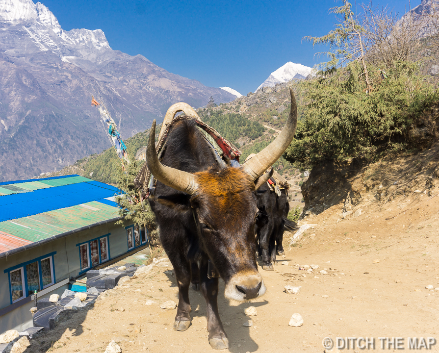 Early start hiking to Tengboche from Namche Bazaar, Nepal