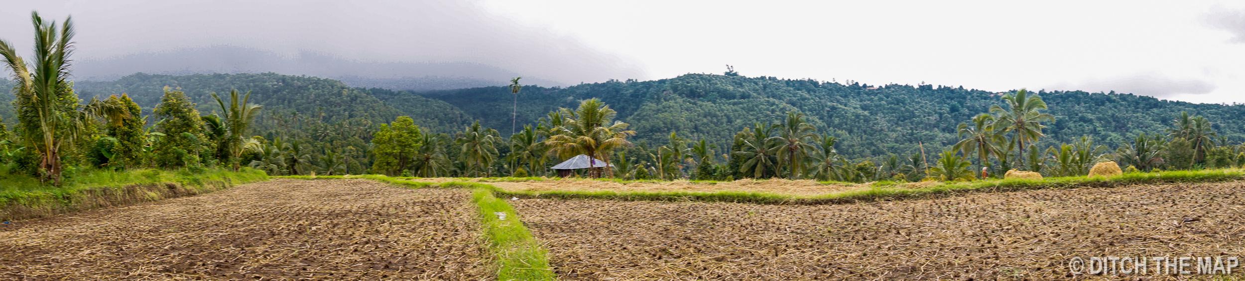 Rice Fields in Munduk, Bali