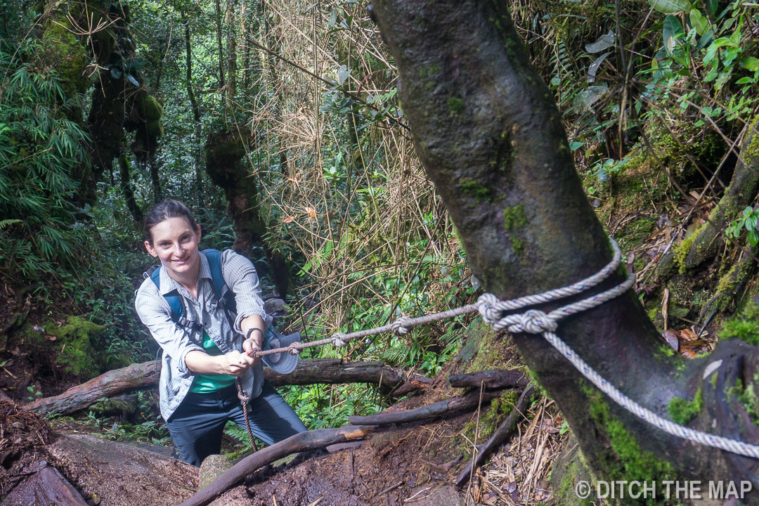 Hiking in the mossy forest in the Cameron Highlands, Malaysia