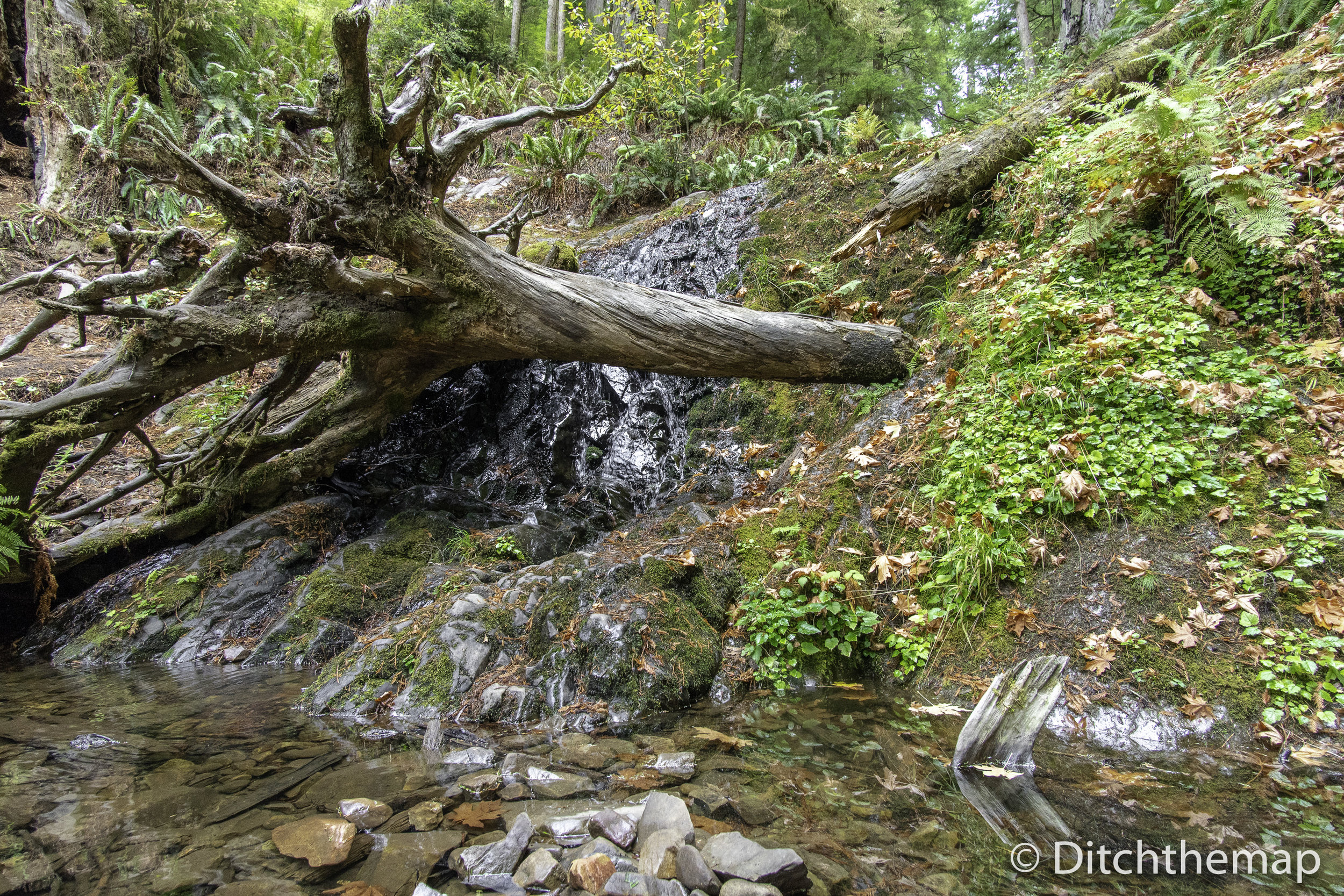 Small Waterfall at Jedediah Smith Redwood - Boy Scout Tree Trail