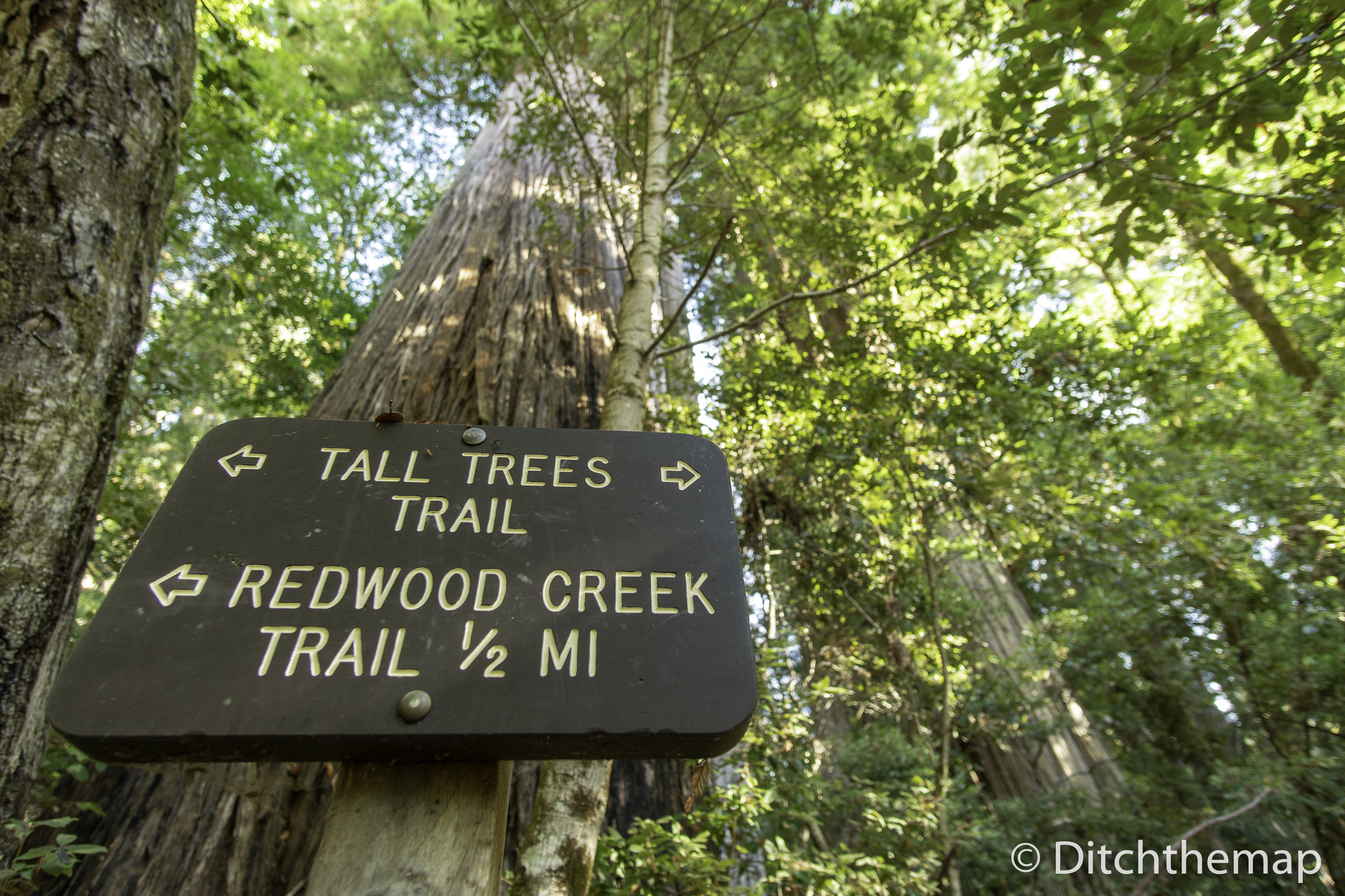 Trail Sign Post - along the Tall Tree Trail