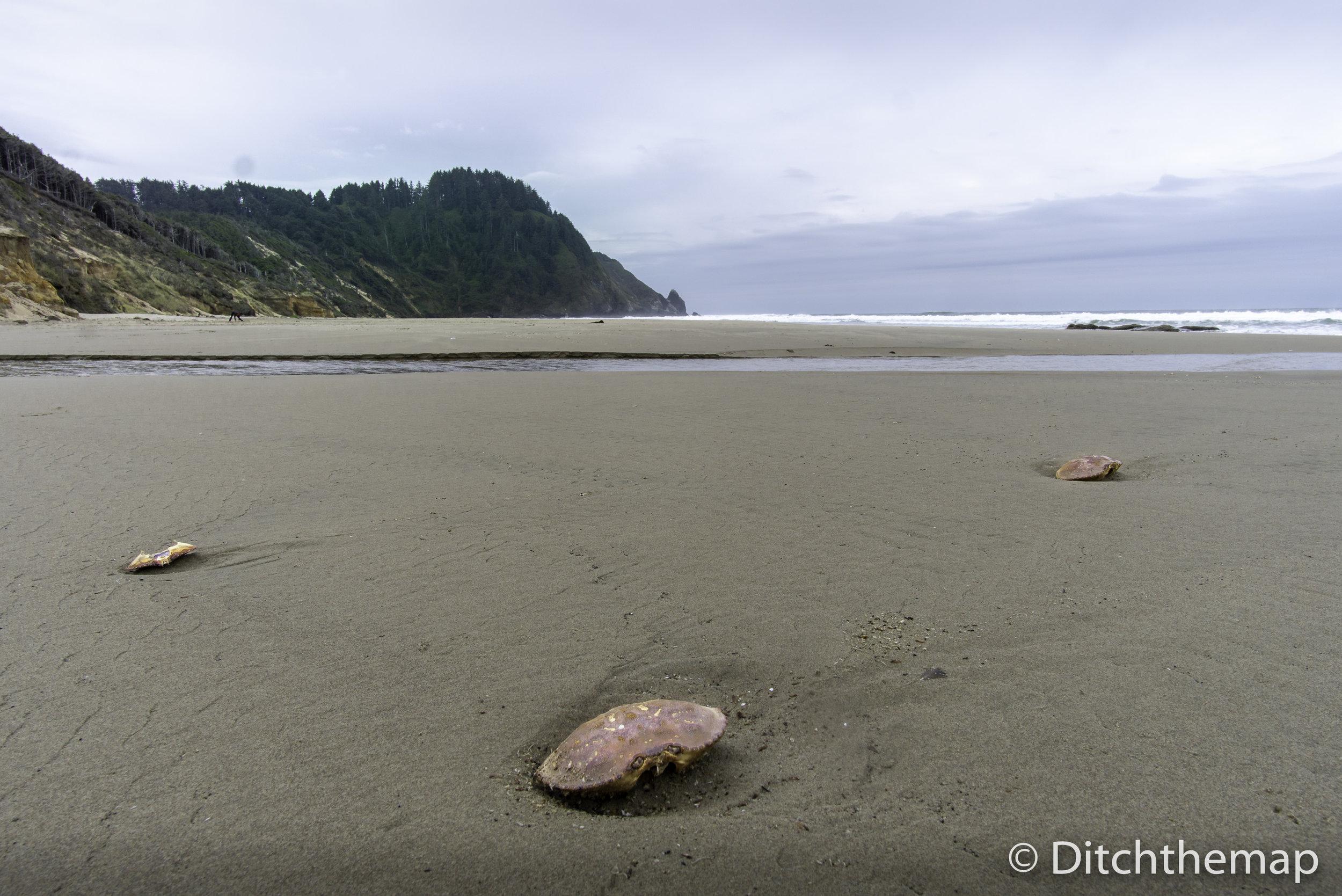 Oregon Coast Beach with crabs on sand