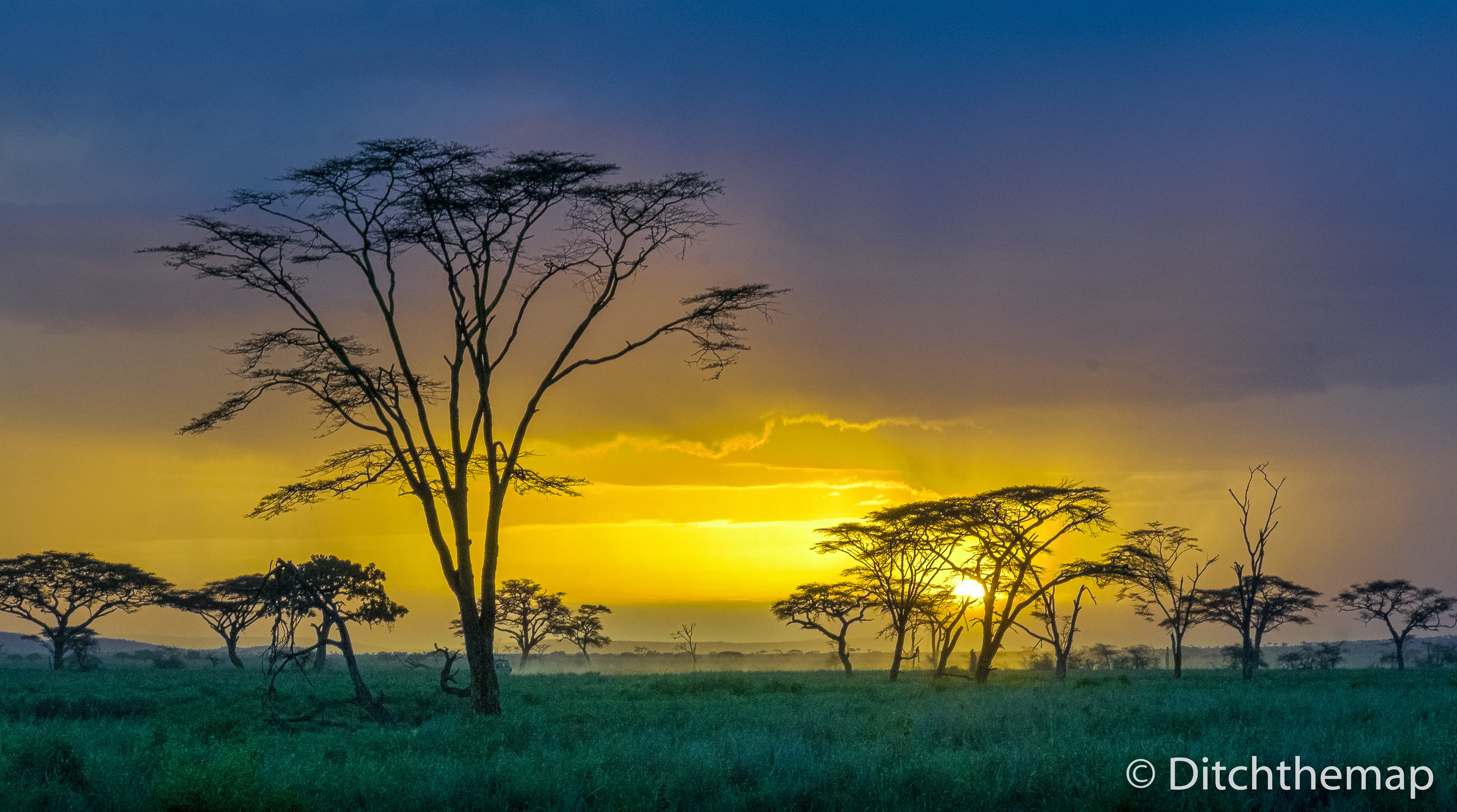 Beautiful sunset in Africa over large trees