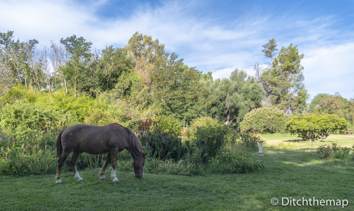 horses graze around the property