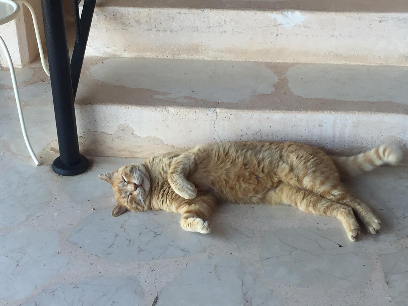 Our Temporarily Adopted Cat, Pistachio, in Kalkan, Turkey