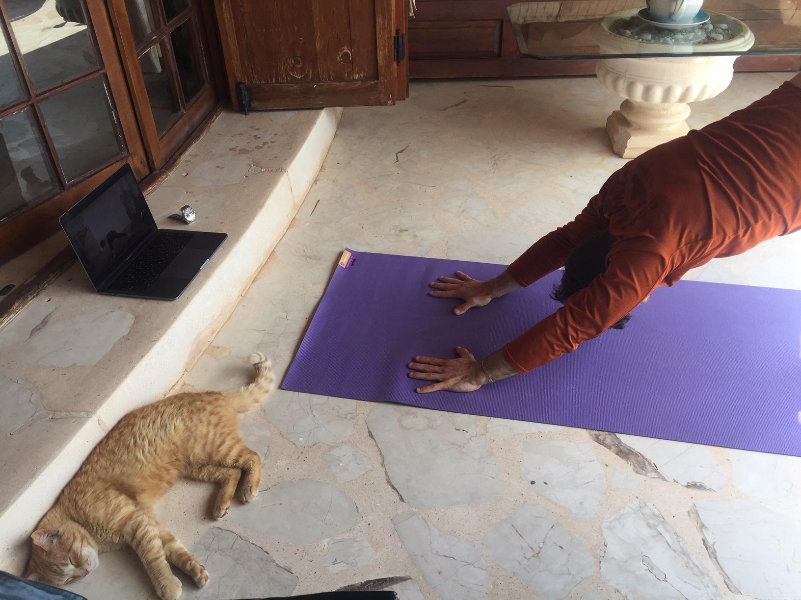 Scott and Pistachio Practice Yoga in Kalkan, Turkey