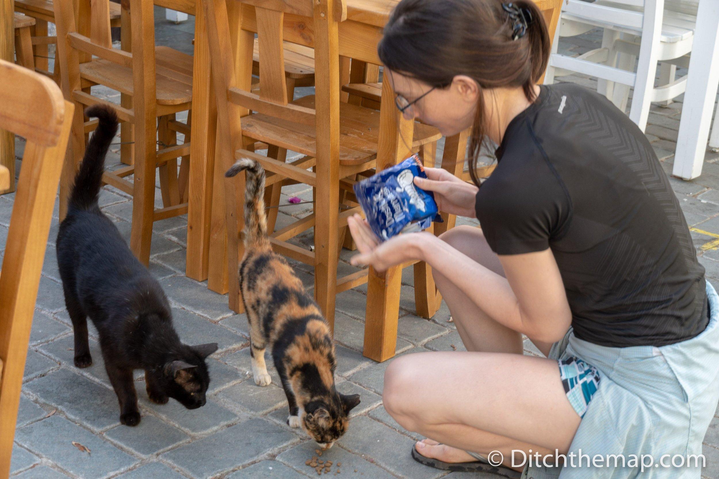 Feeding stray cats Kas Turkey