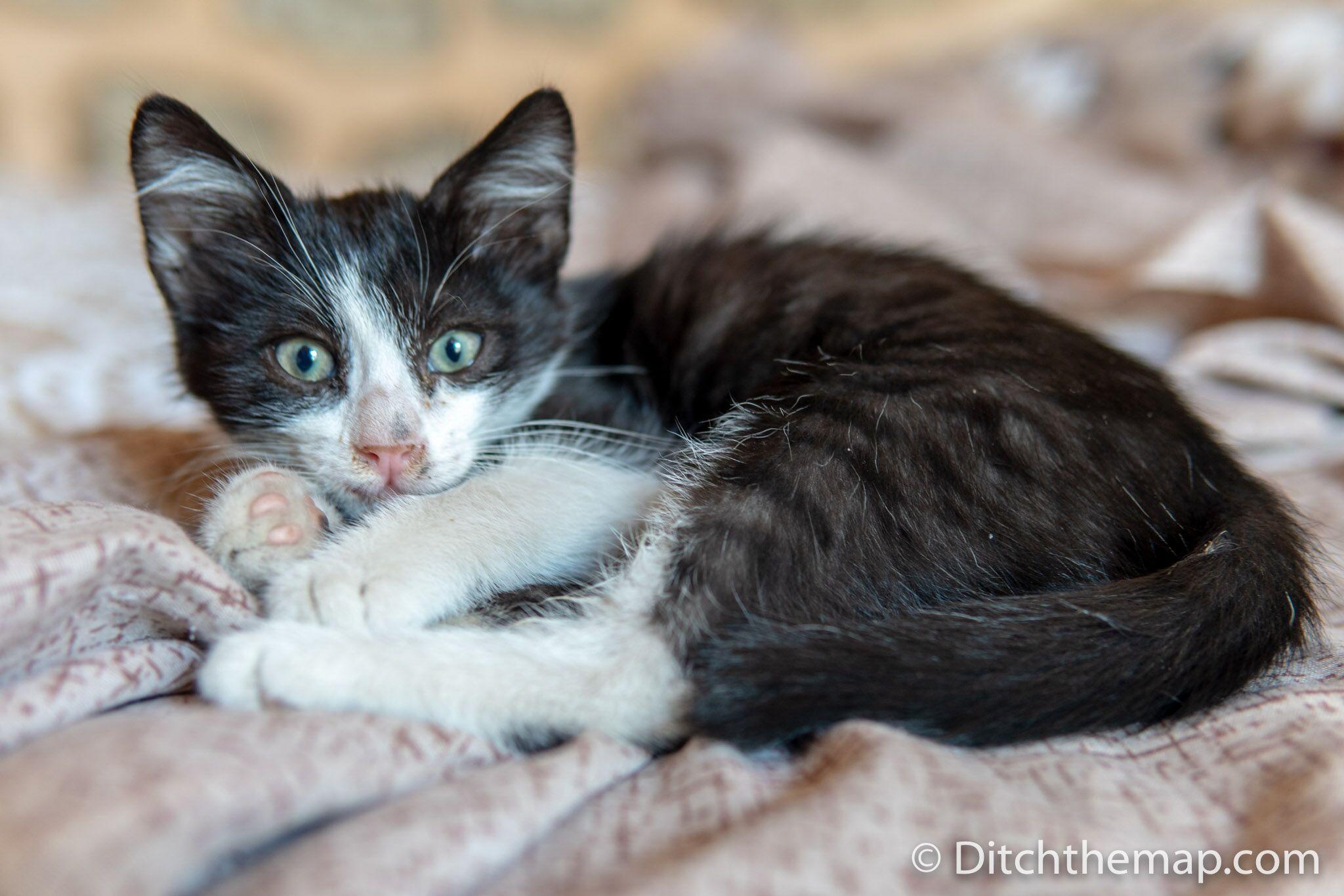 Our kitten in Mardin, Turkey