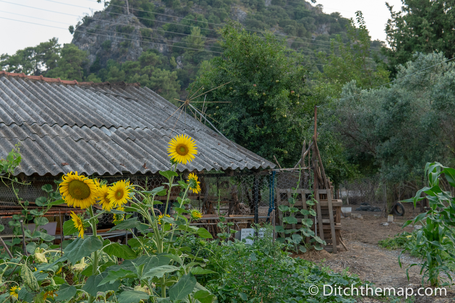 Sunflowers and farmhouse in Turkey
