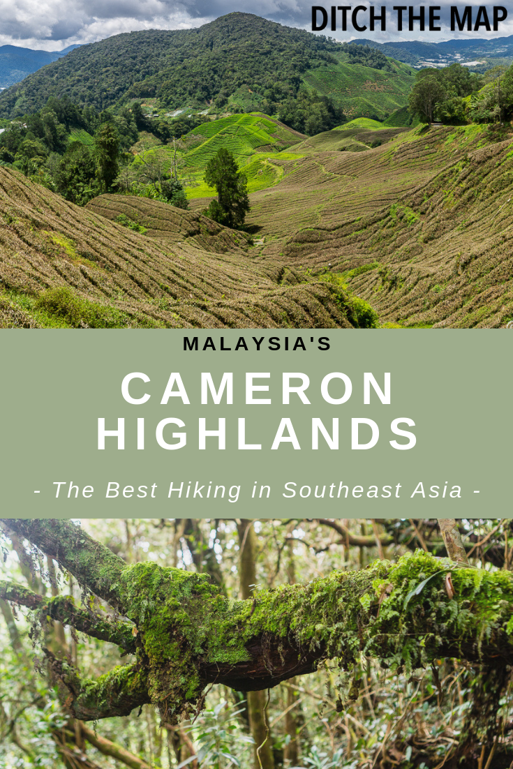 The Best Hiking in Southeast Asian Malaysia's Cameron Highlands