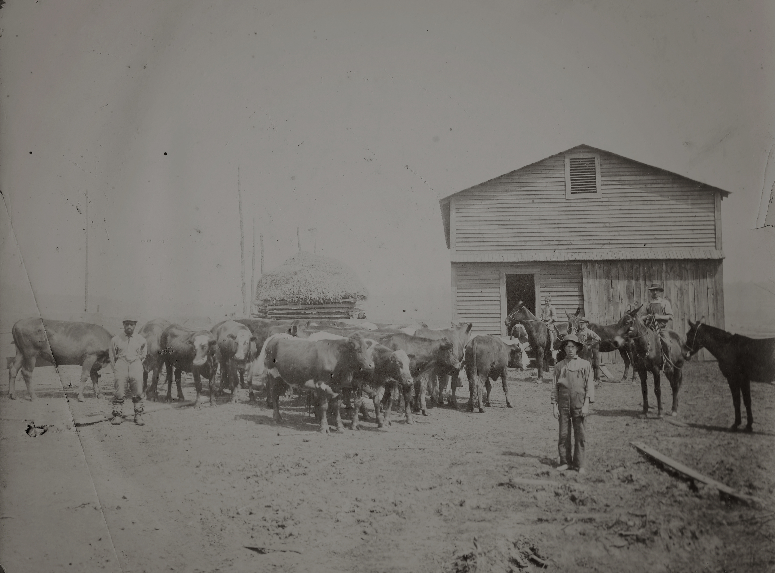 The Cattle Barn