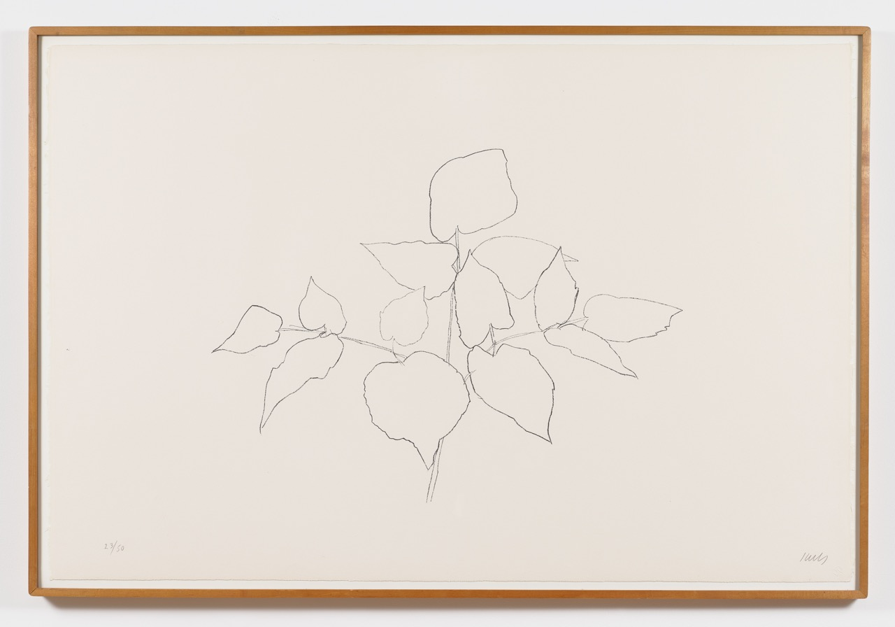 Ellsworth Kelly,  Sarsaparilla (or Ailanthus Leaves) , 1979–80, Transfer lithograph, Edition of 50, 31 1/2 x 47, EKE7901  4/12  Lawrence Markey Inc.