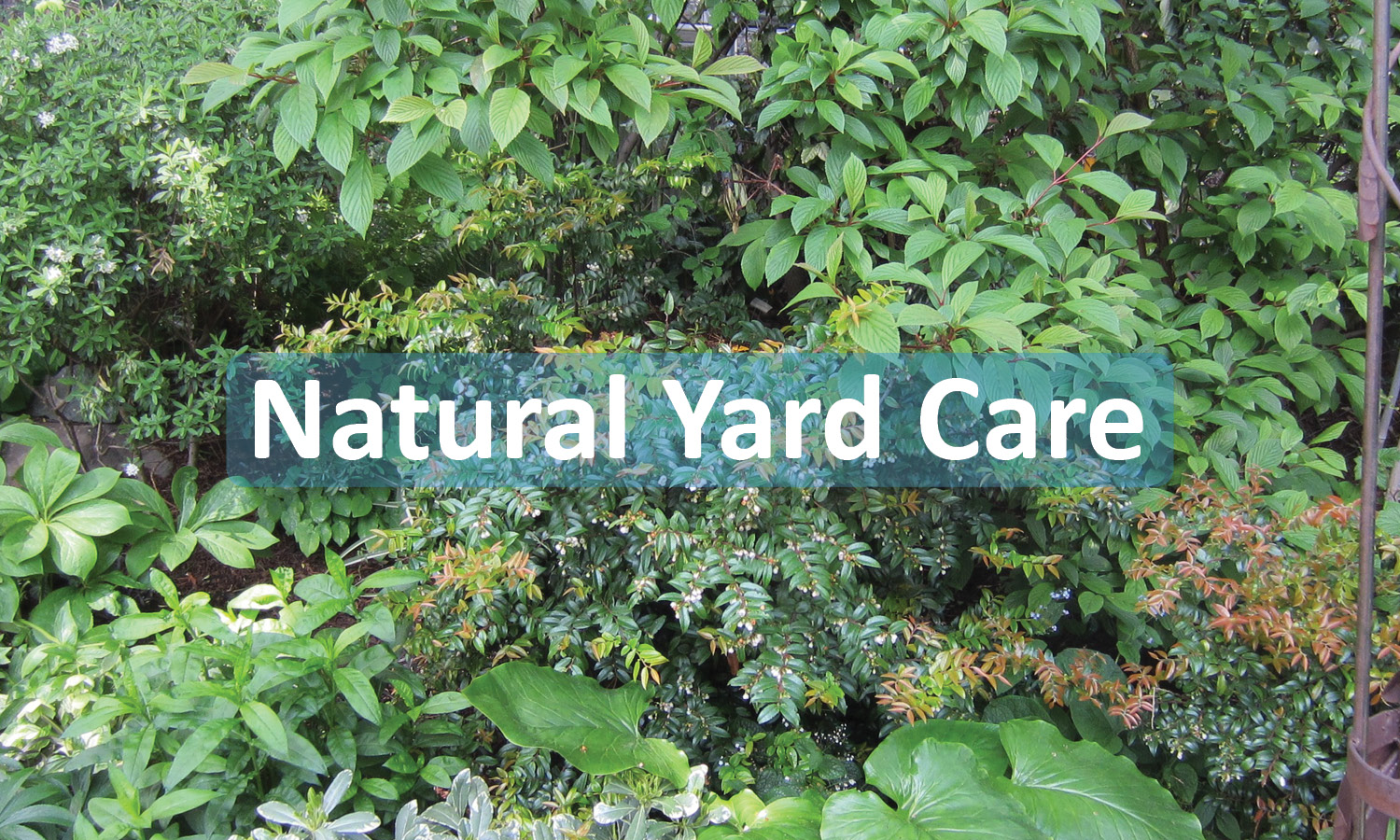 Natural Yard Care Program Button