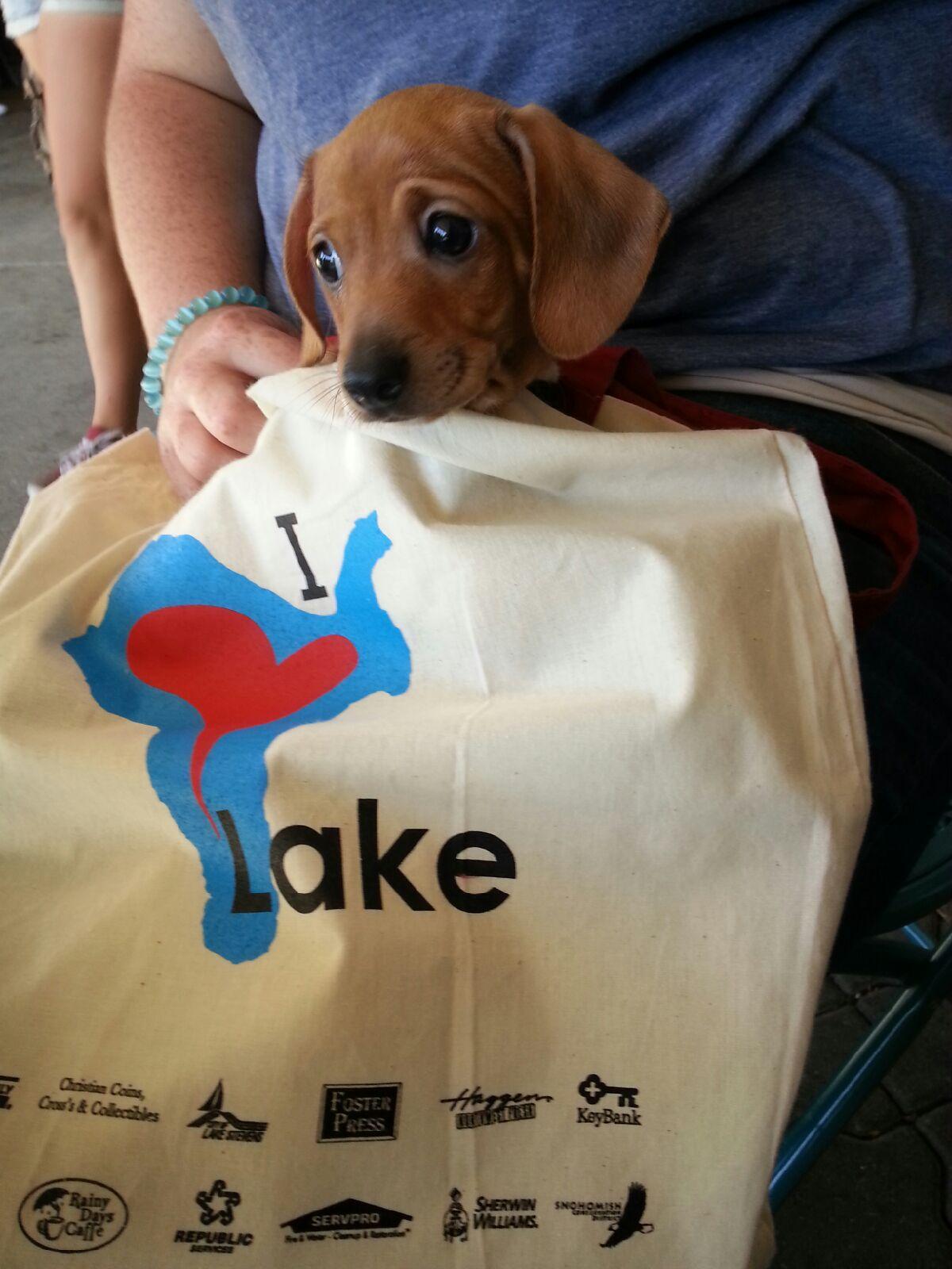 Cute dog inside of the 'I Love Lake' tote!