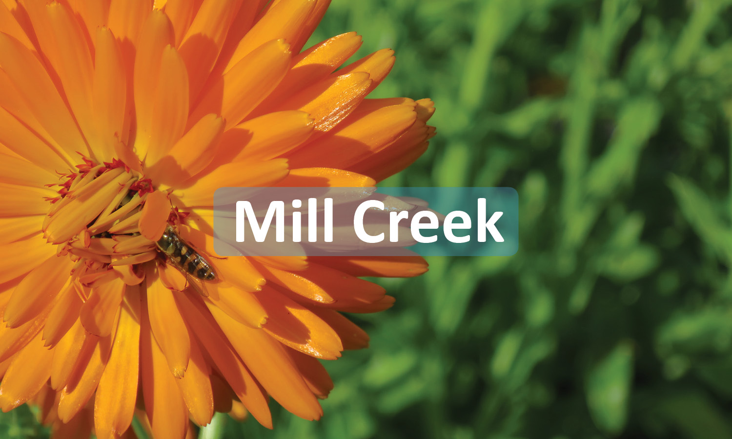 City of Mill Creek Button