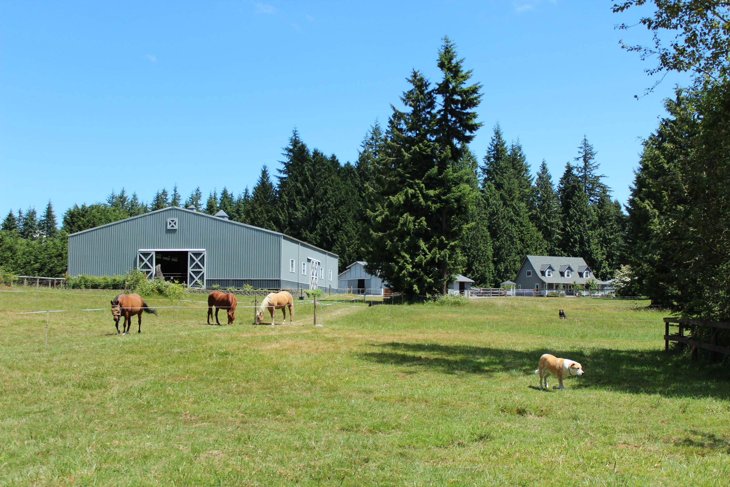 Picture of horses at Lyn's property