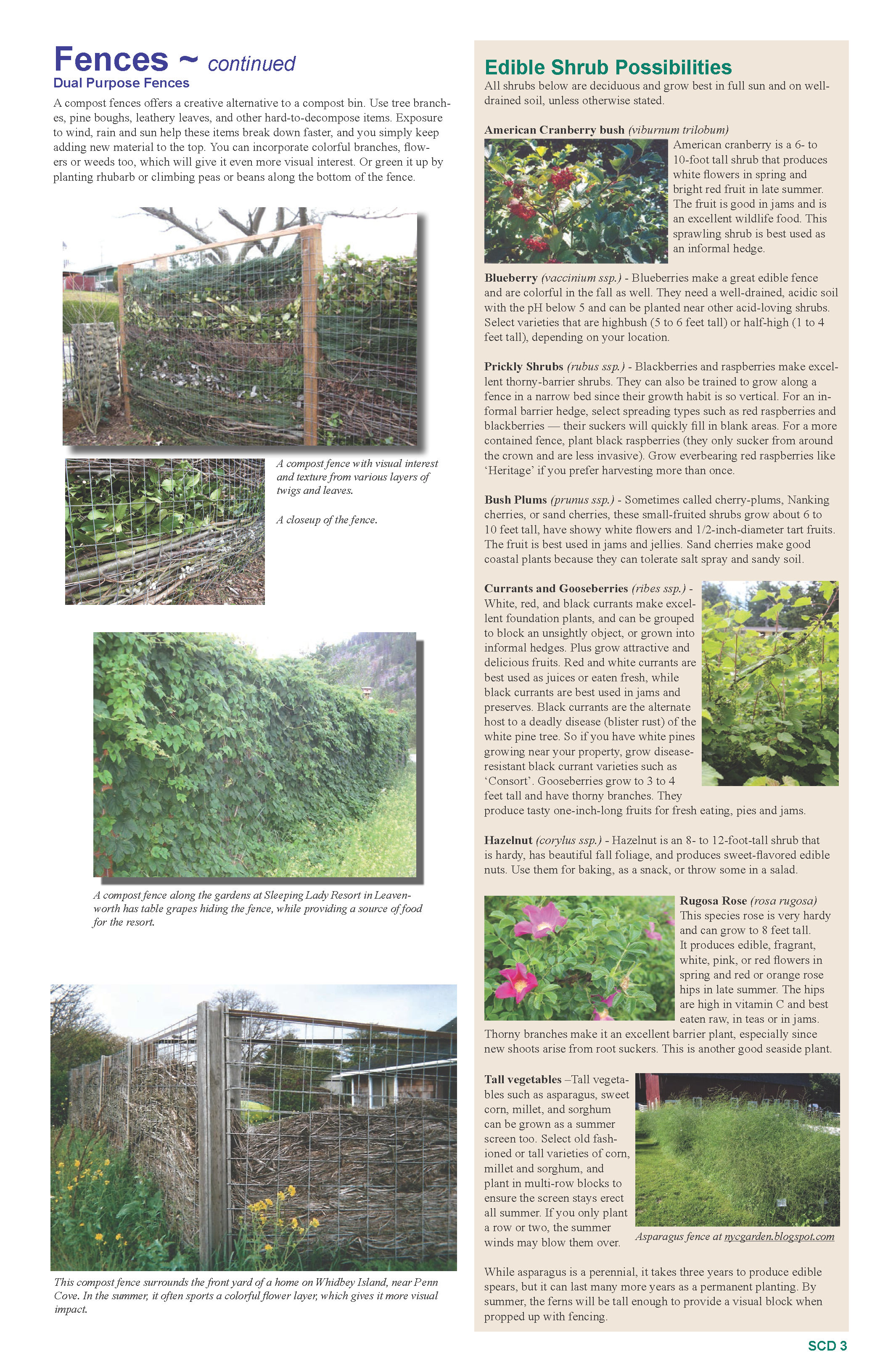 2015 Summer Print_Final resized_Page_3.png