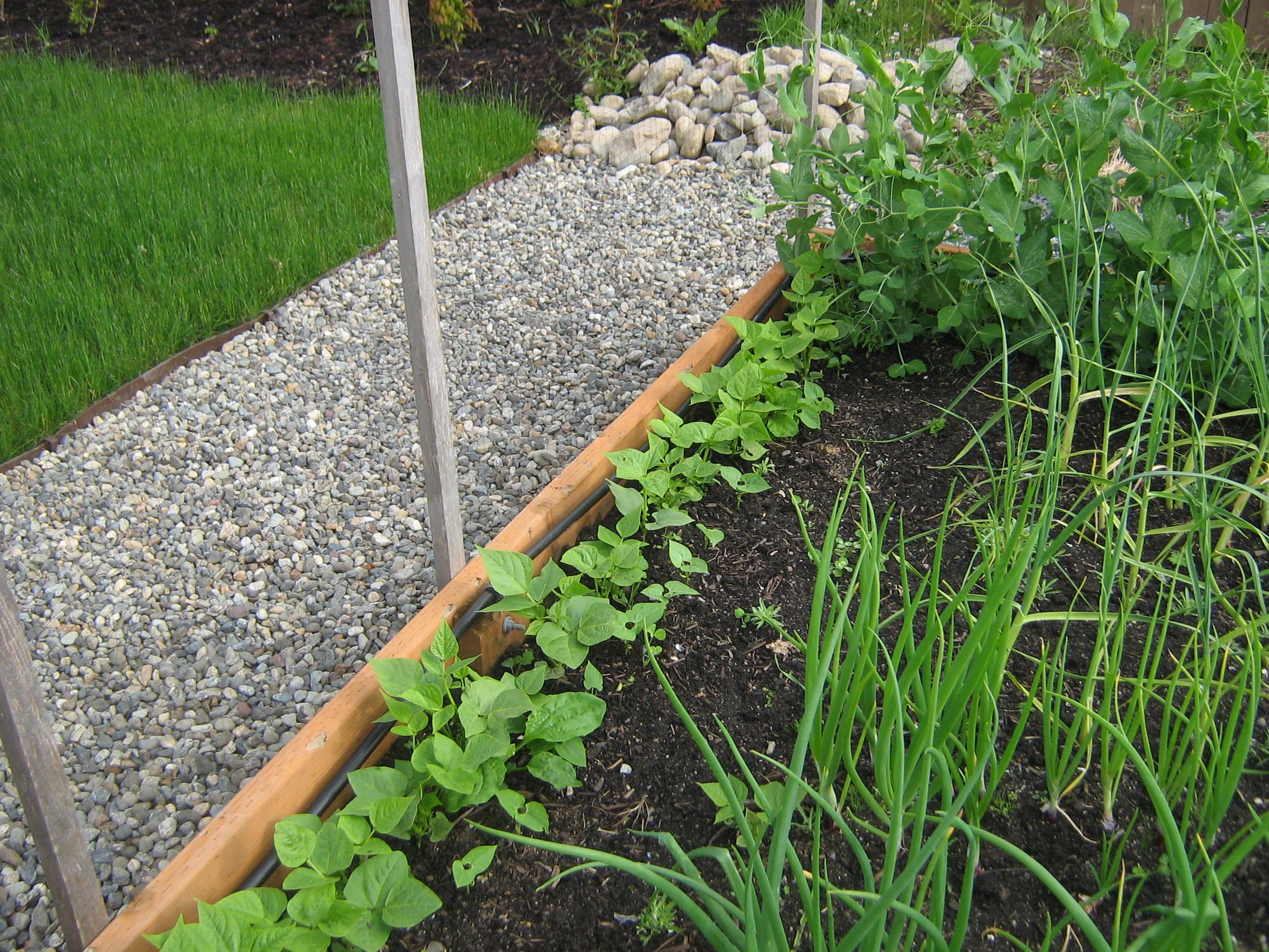 Raised Bed & Grass